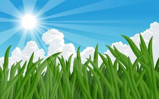 Close up of blades of grass with blue sky  vector