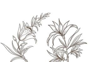 Beautiful artistic sketch floral design