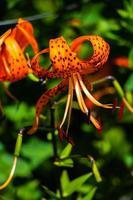 una flor moteada