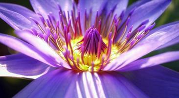 primo piano di un fiore di giglio