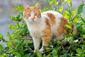 White and brown cat on plants
