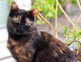 gato con pelaje oscuro en una ventana abierta
