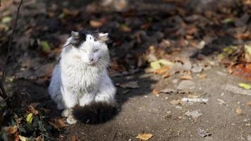 White cat with dark spots sitting on ground