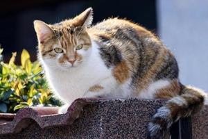 Cat sitting on concrete fence photo
