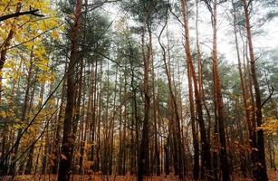 landschap met bosbomen in de herfst