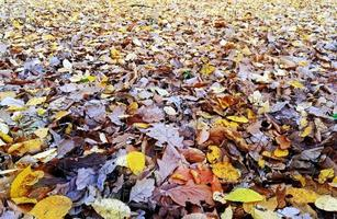 Leaves carpet on ground