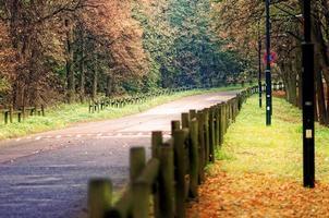 estrada através de árvores da floresta no outono