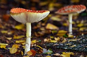 Mushrooms on forest soil