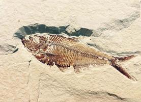 fósil de pescado petrificado