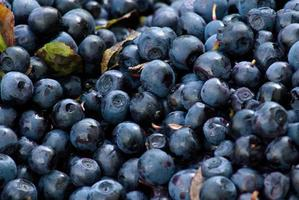 Close-up of a bunch of blueberries