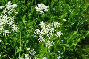 flores blancas en el campo