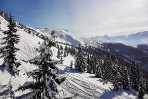 paesaggio invernale con neve e conifere