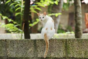 gato blanco en muro de hormigón