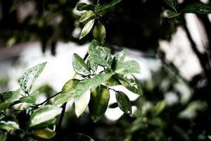 Rain on green leaves