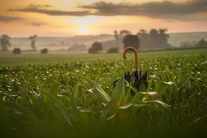 Black umbrella in field photo