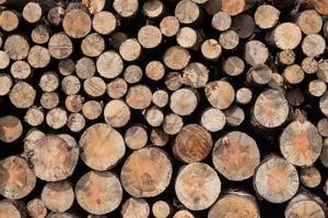 troncos de madera apilados foto