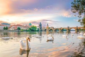 Swans near the Charles Bridge