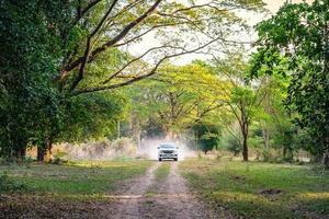 carro na estrada da floresta foto