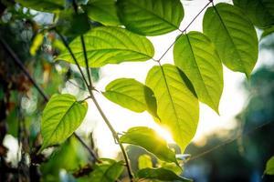 Green leaf in sunlight photo
