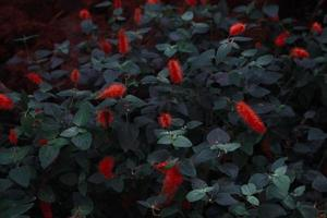 Close-up of plants with red flowers photo