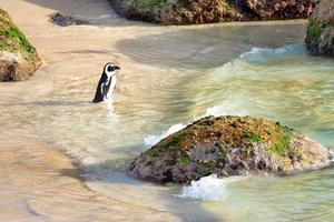 Penguin on beach during the day photo