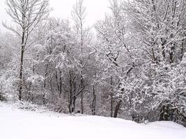 Trees and field covered in snow