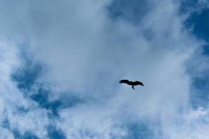 zwarte vogel met het vliegen