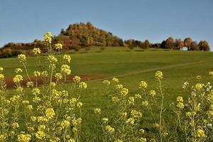 Summer landscape at Tuttlingen in Germany photo