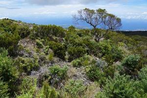 Landscape on La Reunion photo