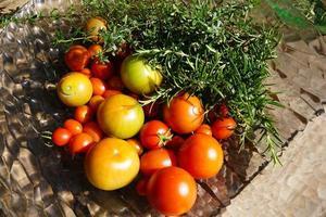 tomates e alecrim foto