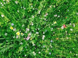 Flower field in summer photo