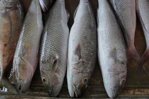 pescados crudos en el mercado
