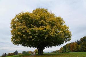 Tree in a park in Zollikon photo
