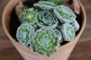 Small cactus flowers