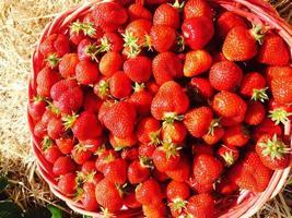fresas en una canasta