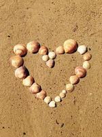 Heart made of shells photo