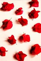 Red petaled flowers photo