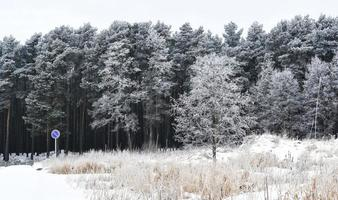 Wintry forest scene