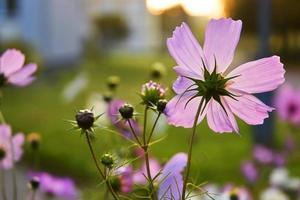 flores de color rosa salvaje foto