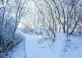 A wintry snow path