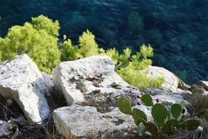 Cactus near stones and greenery