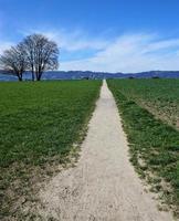 Path in Zollikon photo