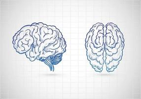 Hand drawn brains sketch vector