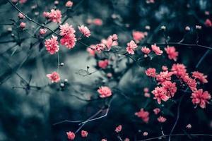 flores rosadas florecientes