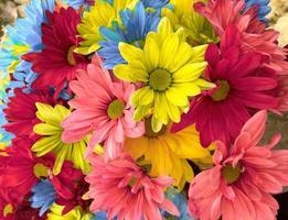 gruppo di fiori colorati
