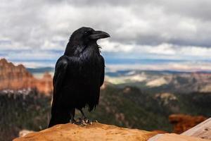 cuervo parado en un pico