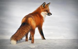 Fox standing on snow
