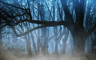 Mysterious forest trees