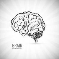 Hand draw human brain sketch  vector