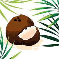 Fresh coconut fruit design  vector